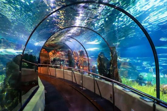 idées evjf la rochelle - aquarium la rochelle