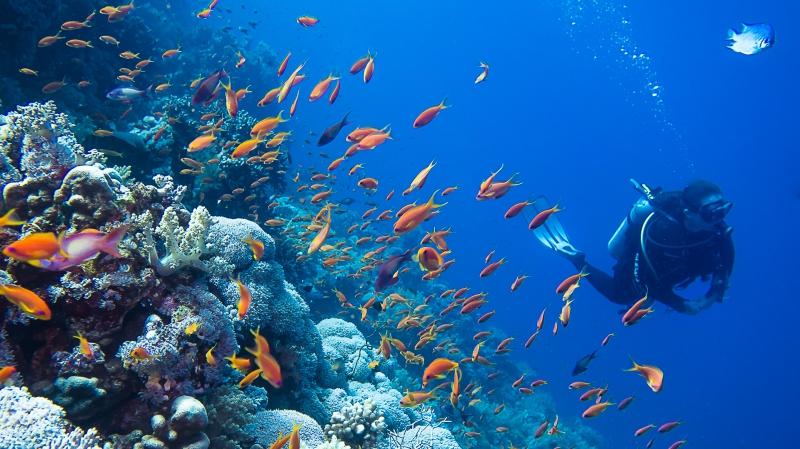 idées evjf la rochelle - plongée sous marine à la rochelle