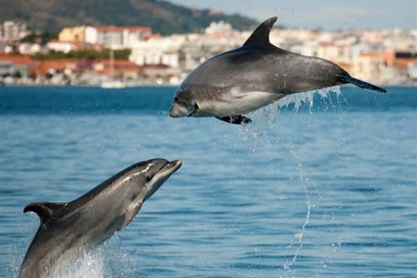 idées evjf lisbonne - voir des dauphins à lisbonne