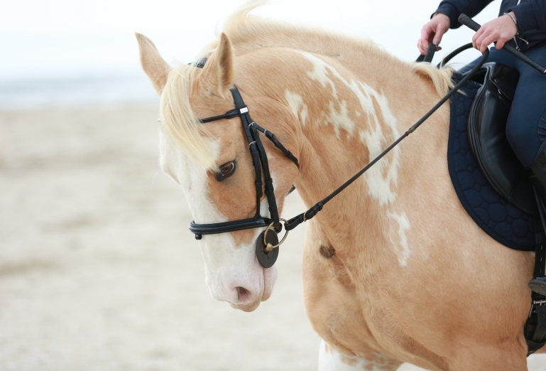 idées evjf milan - balade à cheval milan