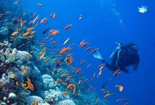 idées evjf montpellier - plongée sous marine montpellier