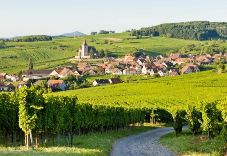 idées evjf strasbourg - visite des vignobles strasbourg